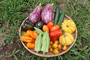 うさぎ農園さんの野菜