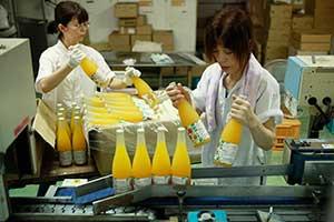 ジュースの瓶詰め作業の様子の写真
